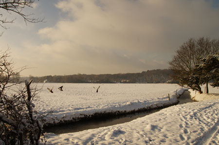 The meadow 20-12-2010