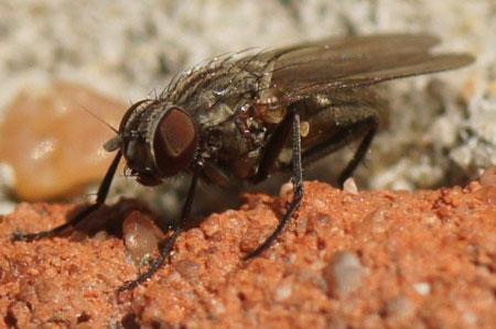 vliegen,muggen, Deco ideeën