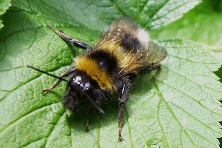 Bijennest in de grond