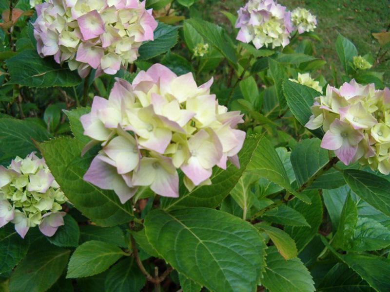 Struiken Met Bloemen Voor In De Tuin.Struiken Zomerbloeiers